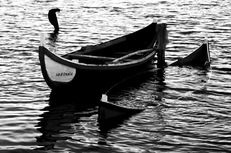 lagoa - Mira - 9244_1