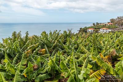 Madeira_6223