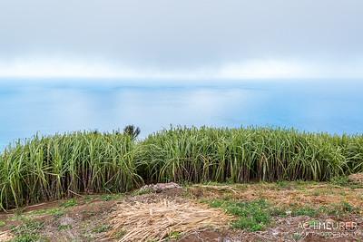 Madeira_6954