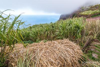 Madeira_6960