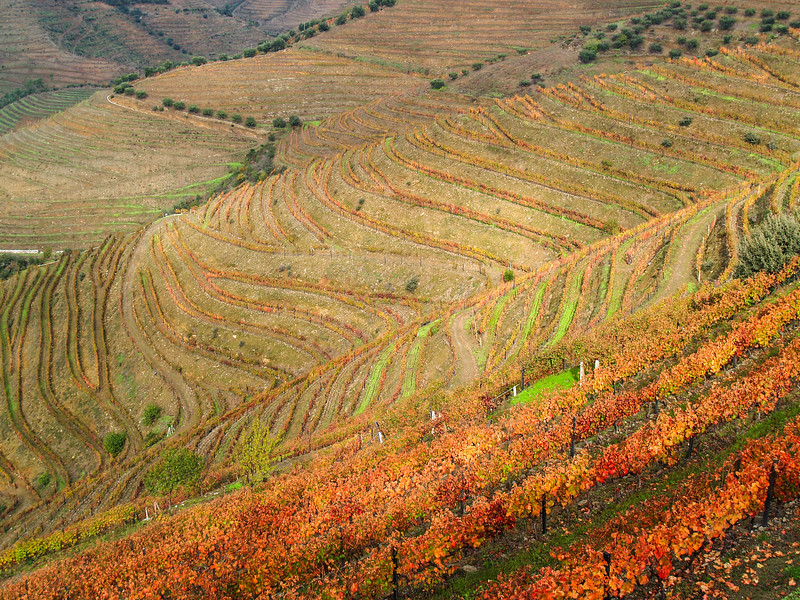 Vale do Douro, the oldest wine region in the world