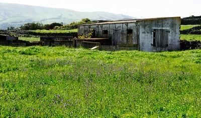 Lavender Yard