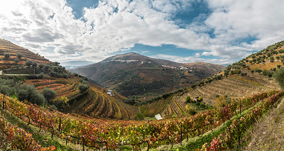 Vineyards at Vila Real
