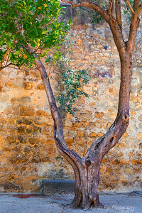 Tree Shading Stone Wall