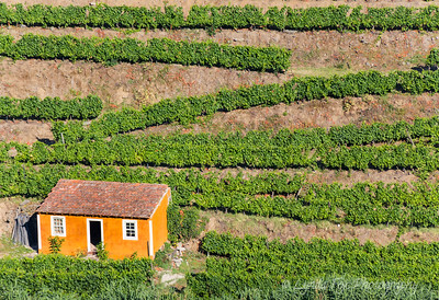 Orange House In Vineyards