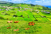 Açores-Faial-Conceição