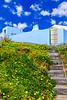 Açores-Faial-Castelo Branco