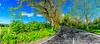 Açores-Faial-Route EN2-2A
