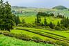 Açores-Terceira-Sierra de Santa Bárbara-overlook