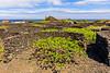 Açores-Pico-Cais do Mourato-Fig farm