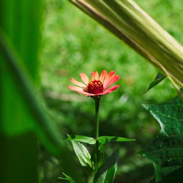 Costa Rica _IGP9473