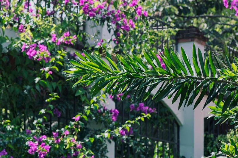 Costa Rica 2_IGP9649