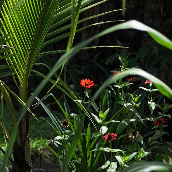 Costa Rica _IGP9462