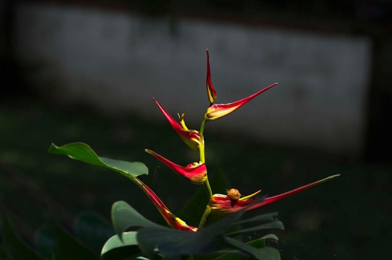 Costa Rica _IGP9708