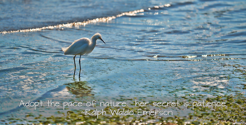 Adopt the pace of nature - Emerson quote