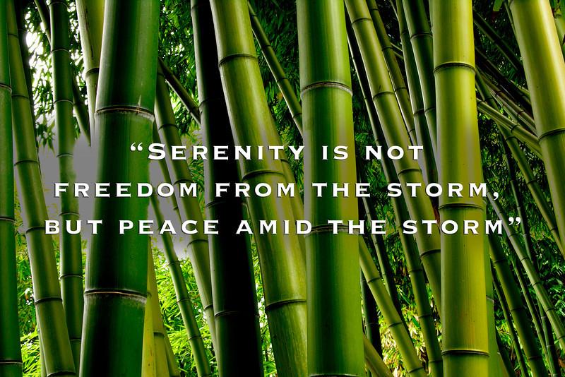 Bamboo Serenity
