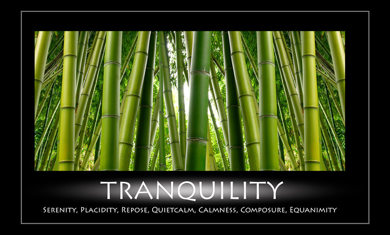 Tranquility and bamboo