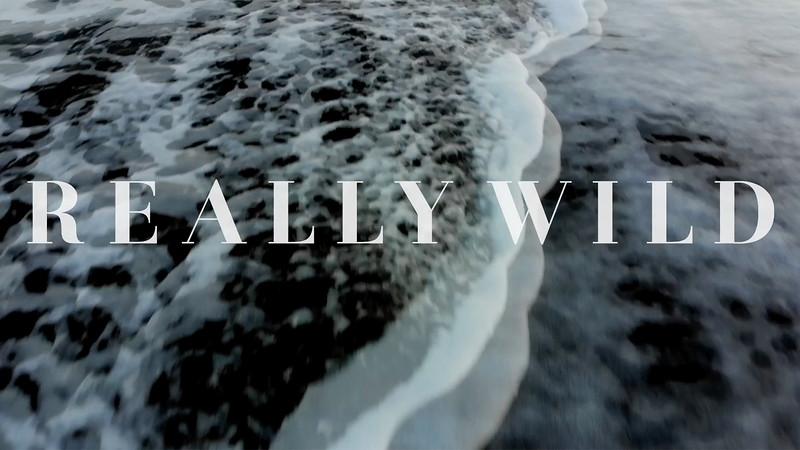 Really Wild S/S