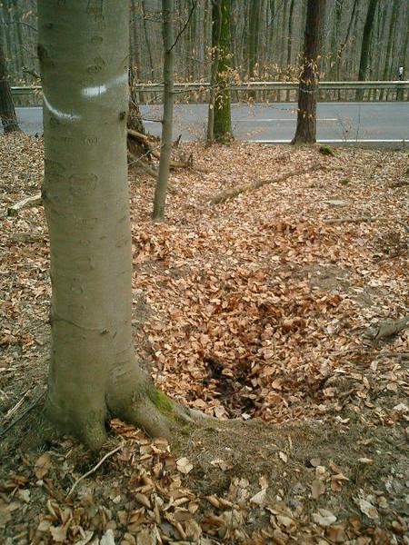 Foxholes near the street Waldesch-Rhens (A-347)