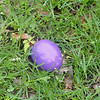 Lonely purple egg just waiting to be picked up