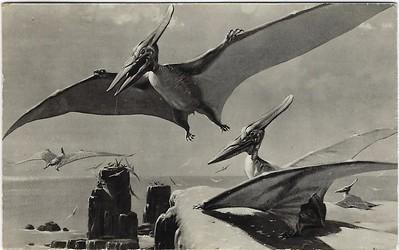 Pteranodon British Museum (Natural History)
