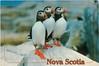 Puffin Nova Scotia 1997 M&D
