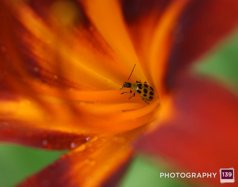2012 Iowa State Fair Photography Salon - Lonely Insect