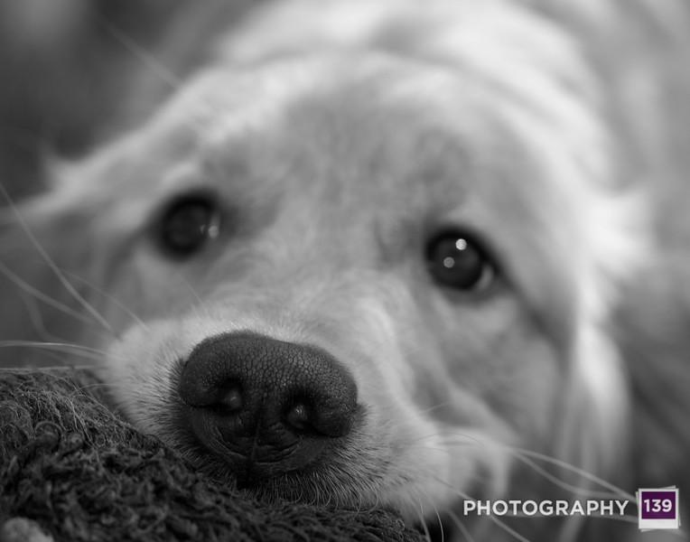 2012 Iowa State Fair Photography Salon - Dog I Know