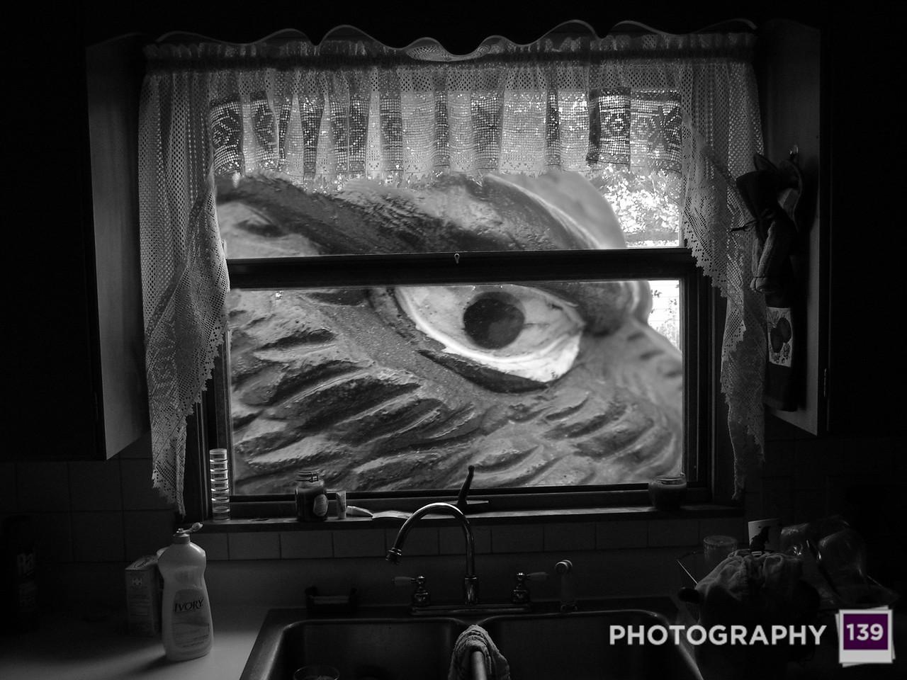 2005 Boone County Fair Photography Contest - Eye of the Beast