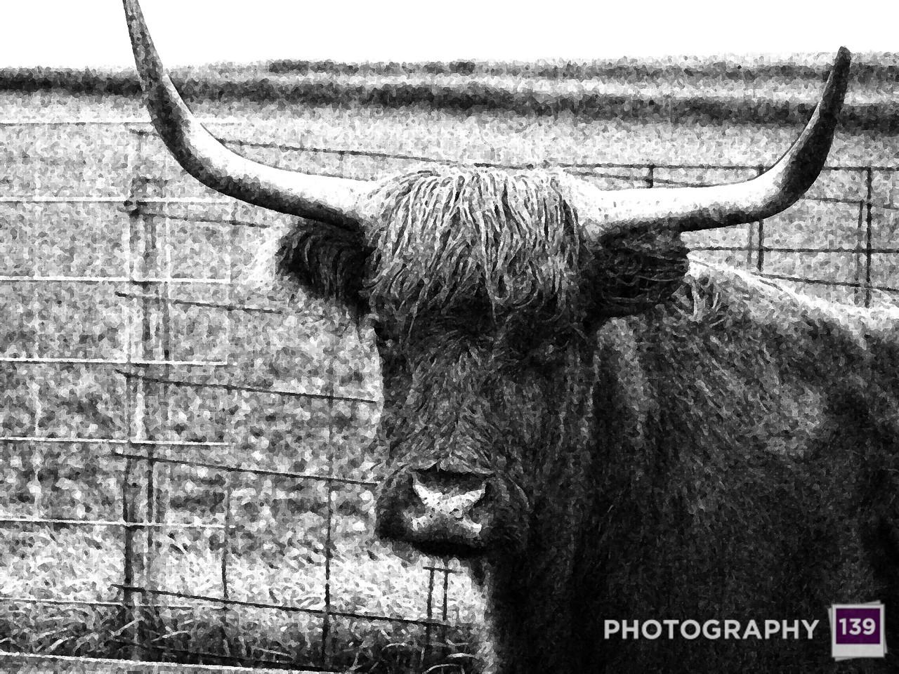2005 Ogden Fun Days Photo Contest - Giotto's Bull