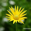 August - Flower Calendar