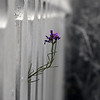 Series #1 Postcard: Fence