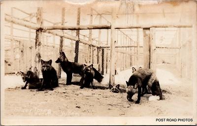 Postcard-FF-680W USA Alaska (AK) - - - -_0007_b