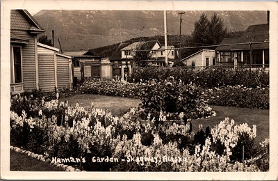 Postcard-FF-680W USA Alaska (AK) - - - -_0008_b