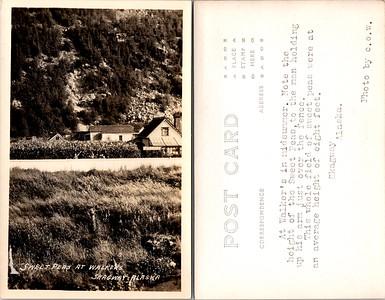 Postcard-FF-680W USA Alaska (AK) -image2 (2)