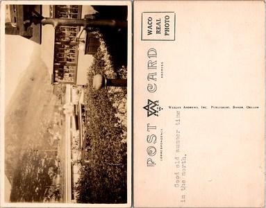 Postcard-FF-680W USA Alaska (AK) -image4 (2)