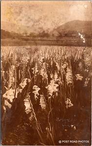 Postcard US Alaska RPPC Government Railway circa 1920 obverse caption  (18)