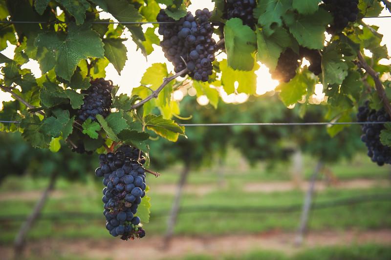 Wine, Fredericksburg, Vine, Fredericksburg wine country cori baker