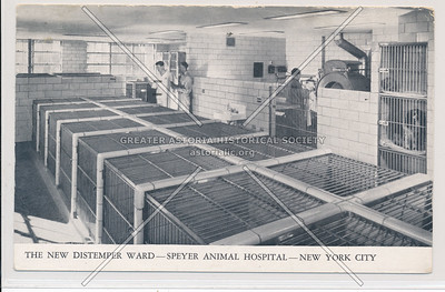 Distemper Ward- Speyer Animal Hospital- New York City