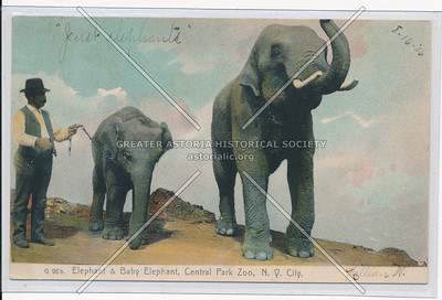 Elephants in Central Park
