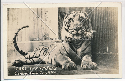Lady the Tigress, Central Park Zoo