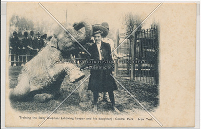 Taining Elephant in Central Park