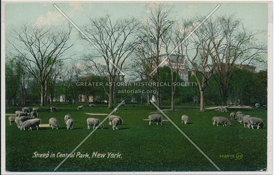 Sheep Meadow, Central Pk