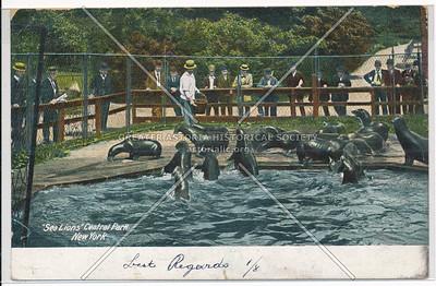 Sea Lions Central Park