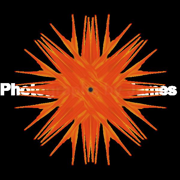 466. Orange Echinoidea Charisma Transparency