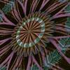 812. Abstract Autumn Colour Flower Motif