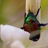 84. Bug on Flower