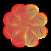 361. Allium Wheel Transparency