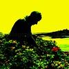 Coastline Gardener