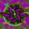 798. Green Purple Flower Stamen Abstract